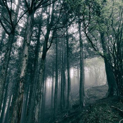 آلبوم In the Dark Woods پیانو کلاسیکال آرام و تسکین دهنده از Akira Kosemura
